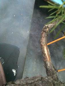 Tuer Un Arbre Avec De L Acide : plier un gros tronc avec olivier barreau trucs et ~ Dailycaller-alerts.com Idées de Décoration