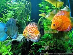 aquarium eau douce d 233 finition