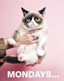 grumpy cats maiko nagao grumpy cat s take on mondays