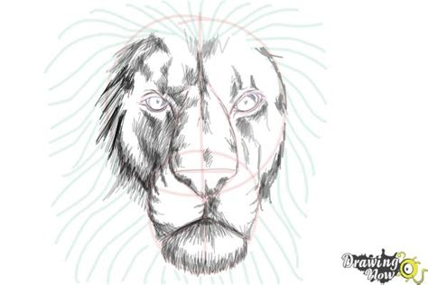 draw  lion face drawingnow