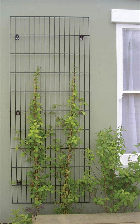 treillis pour plante grimpante treillis pour plantes grimpantes projet bureaux ubisoft treillis fixation et