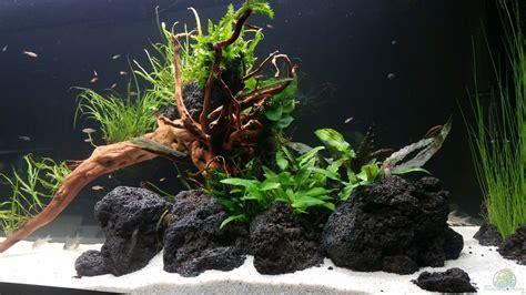 fische kleines aquarium aquarium panzerwelsfan kleine fische