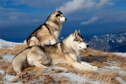 Dog Breeds Wallpapers Trends