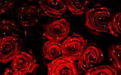 Misty Growing Streaks Rose Lady Sparkle She