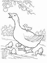 Coloring Pages Goose Birds Printable Library Colorir Animais Fazenda Desenhos Para Clipart Popular Coloringhome Recommended sketch template