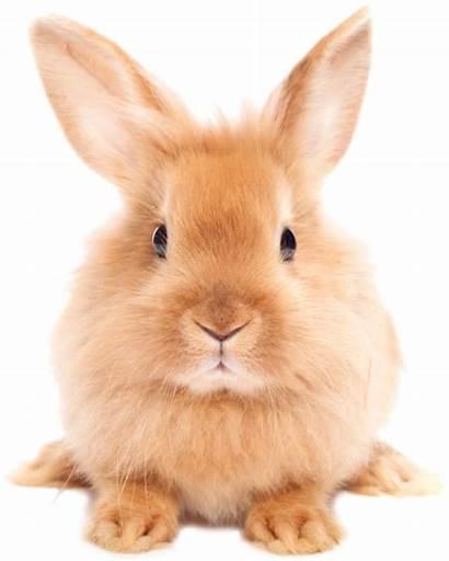 Rabbit Bunny Easter Transparent Cornwall Animals Holidays