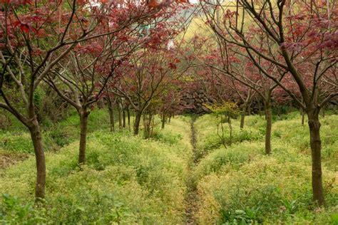 Consulta 1575 fotos y videos de alila anji tomados por miembros de tripadvisor. The color of nature - Alila Anji - Zhejiang China ...