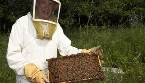 famous beekeepers animals momme