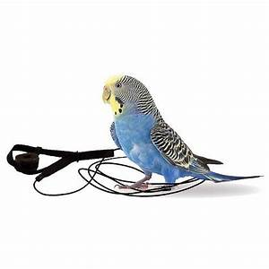 The Aviator Parrot Harness  U0026 Leash - Mini