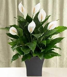 Große übertöpfe Für Zimmerpflanzen : zimmerpflanzen ~ Bigdaddyawards.com Haus und Dekorationen