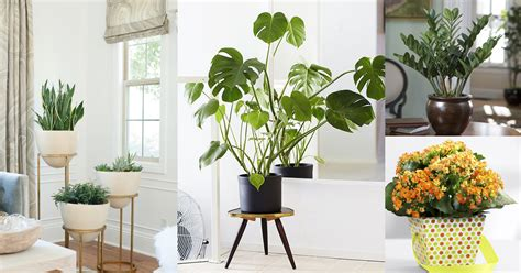 low maintenance indoor plants 19 best low maintenance