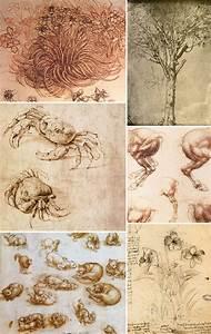 Biologia ed arte: il disegno naturalistico Didatticarte