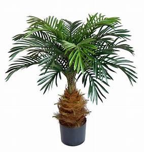 Palmen Für Die Wohnung : cycaspalme 80cm da k nstliche palme kunstpalmen cycas kunstpflanzen ~ Markanthonyermac.com Haus und Dekorationen