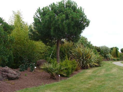pin parasol qui jaunit 10 moyens d obtenir de l ombre au jardin jardinier conseil