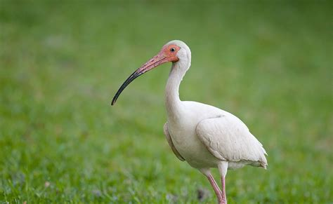 welcome to florida birds