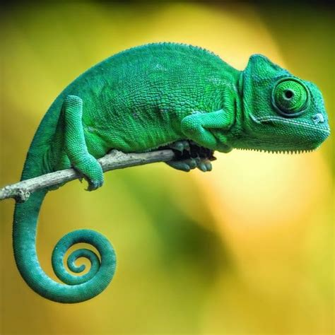 chameleon pet el camale 243 n una mascota para expertos camale 243 n pinterest chameleons reptiles and animal
