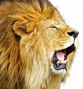 Lion Roar PNG image - PngPix