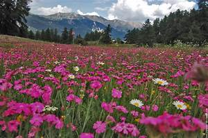 hotel r best hotel deal site With champ de fleur tapis