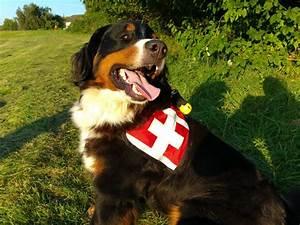 Berner Sennenhund Gewicht : jodie berner sennenhunde von den knuddelhelden ~ Markanthonyermac.com Haus und Dekorationen