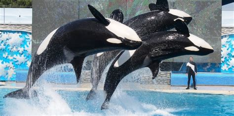 Kavanaugh's awful SeaWorld dissent - bad for workers, bad
