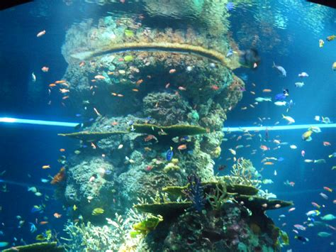 sea aquarium singapore world s largest aquarium at resorts world sentosa singapore travel