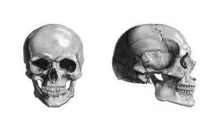 Front and Side View Skull Drawings