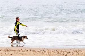 Vermieter Verbietet Hund : urlaub mit dem hund im ferienhaus ~ Lizthompson.info Haus und Dekorationen