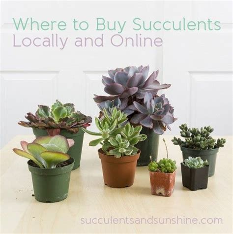 order succulents 37 best images about where to buy succulents on pinterest book reports buy succulents online