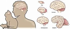 35 3  The Central Nervous System