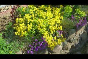 Hang Bepflanzen Pflegeleicht : video bodendecker am hang pflanzen n tzliche hinweise ~ Lizthompson.info Haus und Dekorationen