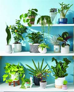 20, Indoor, Plants, That, Are, Easy, To, Care, For