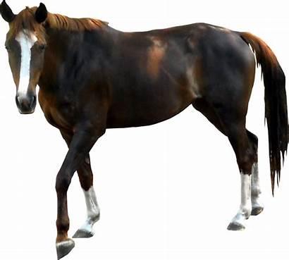 Horse Transparent Background Animals Clipart Pngimg Freepngimg