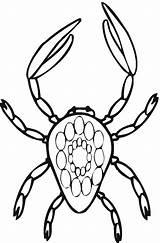Crab Coloring Printable Animal Coloringpages101 Animalplace sketch template
