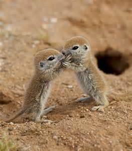 Cute Baby Prairie Dogs