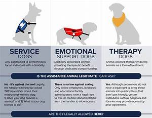 infographic real service dog