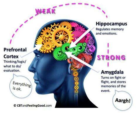 understanding  stress response chronic activation
