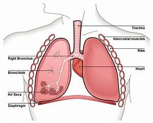 Bbc - Standard Grade Bitesize Biology