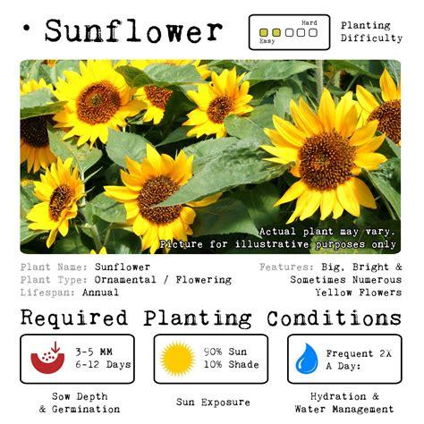 when to plant flowers sunflower grow kit ornamental kit sow gro mnlgrowkits