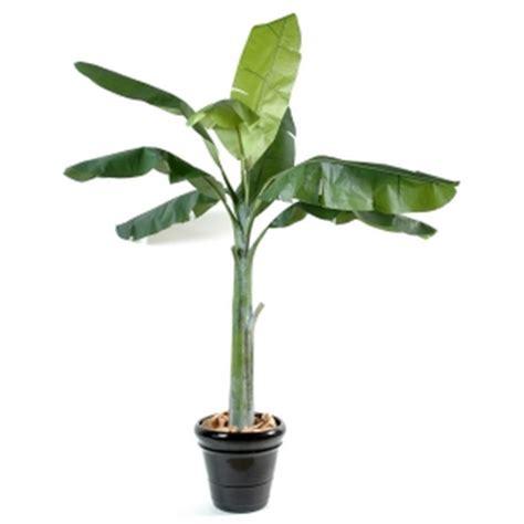 plantes d int 233 rieur rolleco achat vente de plantes d
