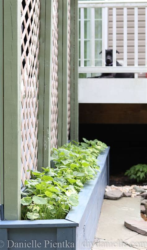 Best Place To Buy Trellis by 25 Best Ideas About Privacy Plants On Garden
