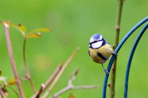 Vögel In Unserem Garten Klassefotos