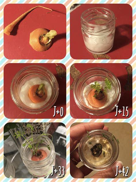 faire ma cuisine comment faire pousser un des fanes de carotte le corps