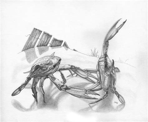 beach crab fight drawing by jonathan w brown