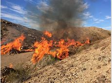 BLM prescribed burn planned in the Hualapai Mountains
