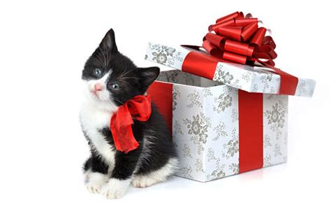 holiday pet gift ideas hostess gifts for pets