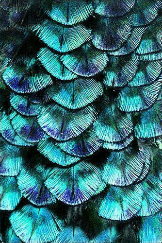Türkis Farbe Bilder by Feathers Inspiration Blaue Bilder Teal Farbe Und