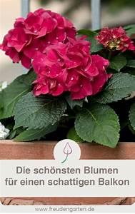 Pflanzen Für Schattigen Balkon : schattenpflanzen f r den balkon gartentipps balkon ~ Watch28wear.com Haus und Dekorationen