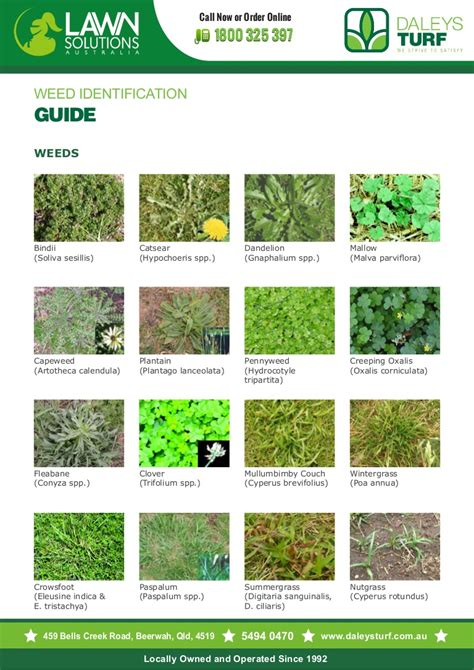 Weed Identification Guide