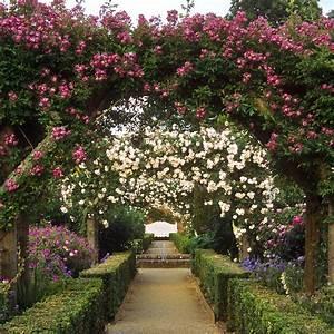 Mottisfont, Abbey, Rose, Garden, Hampshire, Uk