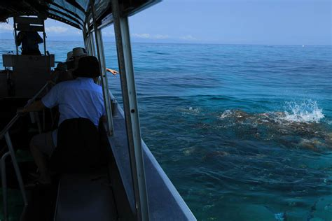 Glass Bottom Boat Tours In Destin Florida by Glass Bottom Boat Tour Destin Ass